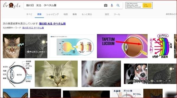 画像検索の結果が一覧となって表示される