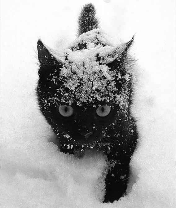 雪にまみれて雪の中を歩く小さな黒猫