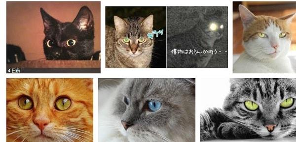 黒猫の目が光って細くなっているで検索すると1位に表示